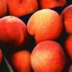 La disparidad entre regiones, periodos de producción y modelos de organización en fruta de hueso, primer punto para la elaboración del Plan Estratégico, según FEPEX