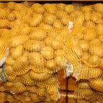 Los cultivadores de patata en Castilla y León están animados a sembrar aunque limitados por la falta de agua