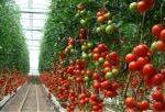 Francia impulsa su sector de hortalizas