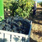 La vendimia y los planes de empleo reducen el paro agrario