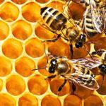 Científicos desarrollan un nuevo enfoque para proteger a las abejas de miel
