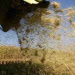 Publicado el período y horario de quemas de la paja del arroz