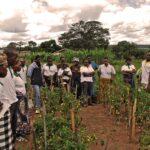 ANOVE promueve una recogida de fondos para capacitación agraria en Tanzania