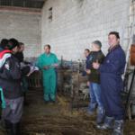 Estudio sobre la ubre de ovejas portadoras del Gen ANGRA Santa Eulalia