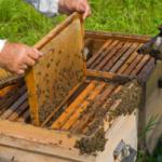 Convocadas en Andalucía las ayudas para la apicultura 2018