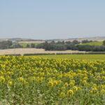 Europa frena la sostenibilidad agraria con normativas excluyentes que van en contra de técnicas como la Agricultura de Conservación