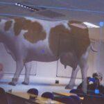 Una universidad británica usa gafas de realidad virtual para llevar las vacas a las aulas