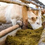 Las exportaciones de ganado vacuno de Castilla y León aumentan su valor un 125% en el primer semestre