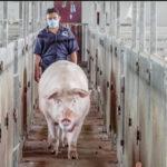 PPA: Situación preocupante en Bulgaria, Rumania y China