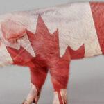 El porcino canadiense está un paso más cerca de llegar al mercado comunitario