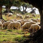 La Junta de Andalucía abre hoy el plazo de solicitud de las ayudas de 2018 para Agrupaciones de Defensa Sanitaria Ganadera