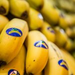 España defiende la continuidad de las ayudas al plátano en el programa POSEI