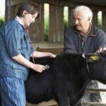 La ventas de antibióticos para animales de producción en el Reino Unido descienden en un 27% en dos años