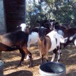 El Mapama firma firma 9 nuevos convenios para el depósito de material genético de animales de razas puras