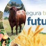 Se amplía el plazo para la contratación del seguro de herbáceos hasta el día 22 de diciembre