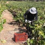 Los productores se sienten ignorados por la DO Vinos de Madrid