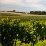 La producción de vino y mosto en Castilla-La Mancha, muy por encima de las estimaciones