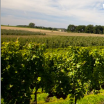 Primera DOP transfronteriza para un vino