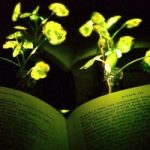Desarrollan plantas capaces de brillar