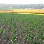 Andalucía ntroduce mejoras en el procedimiento para las excepciones a la conversión a la Producción Ecológica