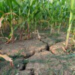 Los regantes de Fenacore ponen en marcha sus propios planes para hacer frente a la peor sequía de los últimos 20 años