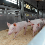 Los auditores publican un documento informativo sobre las medidas comunitarias sobre bienestar de los animales