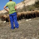 La lana de la oveja merina, presente en la Fashion Week de Madrid