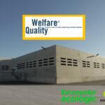 El matadero de Mercavalencia obtiene el certificado europeo Welfare Quality para porcino