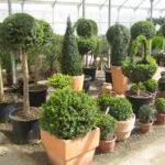La exportación de flor y planta viva crece un 10% hasta noviembre