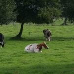 Galicia se consolida como una de las principales comunidades españolas en producción de carne de bovino