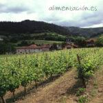 4.950 ha es la superficie que se podrá autorizar para nuevas plantaciones de viñedo en 2018