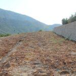 La Comunidad Valenciana pide el respaldo político del Mapama en las medidas de erradicación de la Xylella