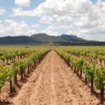 Las exportaciones murcianas de vino aumentaron un 14% hasta noviembre de 2017