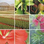 La exportación de flores y plantas vivas crece un 11% en 2017