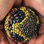 El 10 de febrero se celebra en todo el mundo el Día Global de las Legumbres para promover el consumo de este superalimento