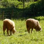 Andalucía autoriza la alimentación del ganado ecológico con productos convencionales por la sequía