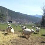 Aragón aumentará en 2 millones la ayuda a la ganadería extensiva en 2018