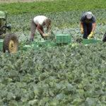 El Gobierno reduce a 20 jornadas las exigidas para cobrar el subsidio agrario en Andalucía y Extremadura
