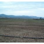 Recomendaciones para el riego de la remolacha en la zona sur