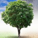 Encuesta de la EFSA sobre cambio climático y seguridad alimentaria