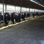 China demandará el triple de leche en 2050 con el consiguiente impacto medioambiental