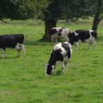 Los productores gallegos estarán exentos de enterrar los purines y estiércoles