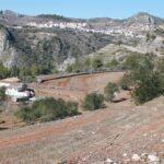 ASAJA Alicante considera un despropósito que Conselleria no haya publicado las indemnizaciones para los afectados por la Xylella y no haya puesto sobre la mesa un plan de replantación