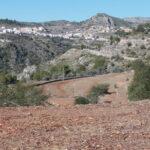 Asaja Alicante: Las indemnizaciones por Xylella llegan tarde y son una burla