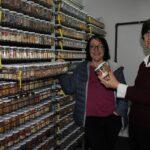 UPV lidera un proyecto para recuperar variedades tradicionales de cucurbitáceas para cultivo ecológico