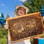 El PE propone un plan para la supervivencia de las abejas