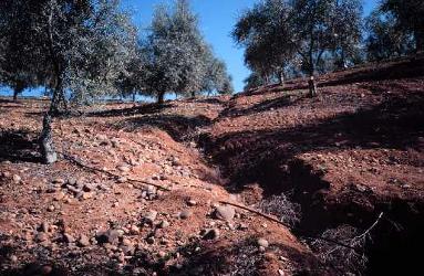 Go para investigar el control de c rcavas para frenar la for Importancia economica ecologica y ambiental de los viveros forestales