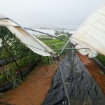 La tormenta Emma causa importantes daños en toda la zona productora de fresa, fresón y otros frutos rojos