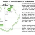 El cultivo y la transformación de hoja de tabaco aportan 120 millones de euros a la economía extremeña