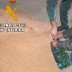 La Guardia Civil investiga a 8 personas en Palencia por uso fraudulento de semillas de cereal